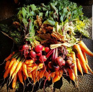 Tom Gogge - veg harvest - RHS 3